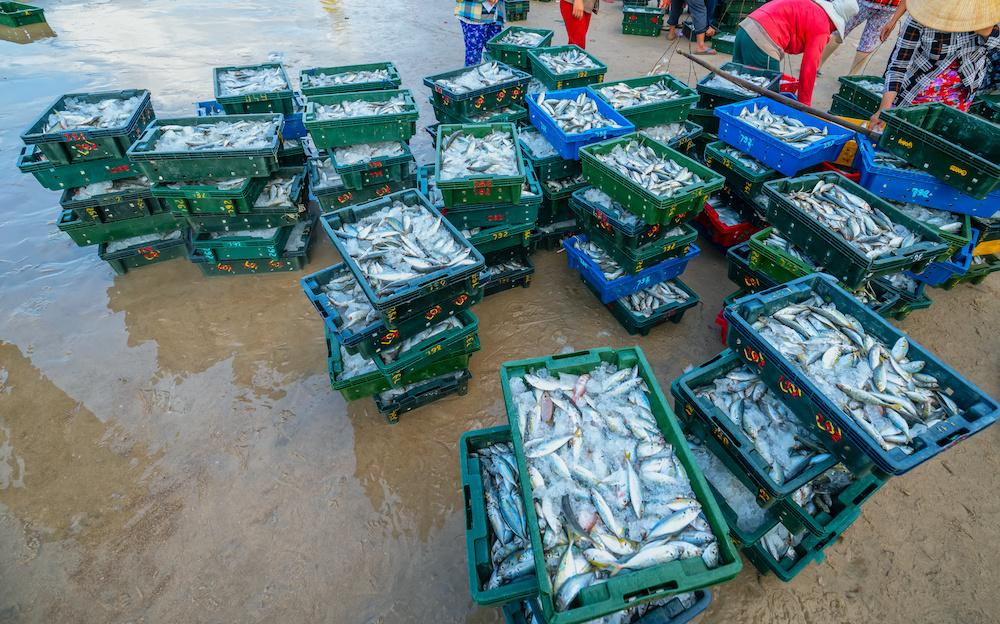 aquaculture fish farming